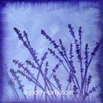 c FLOWERS – lavender