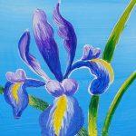 c iris